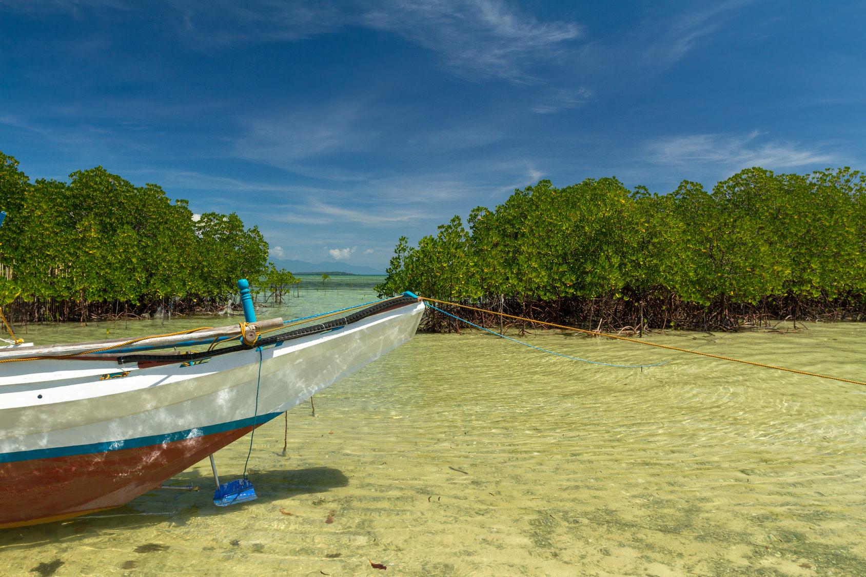 Honda Bay - Palawan, clear water with mangrove trees
