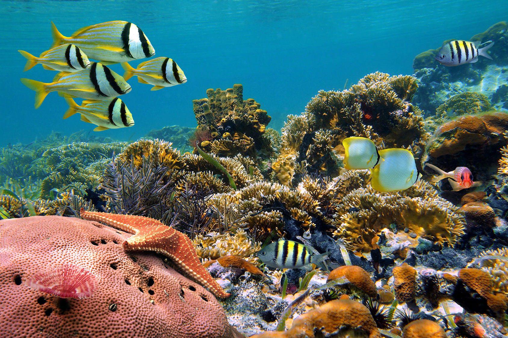 Underwater Marine Life Palawan